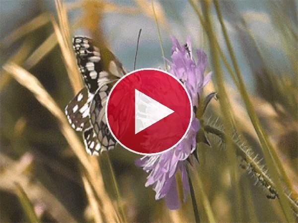 Mariposa posándose sobre una flor