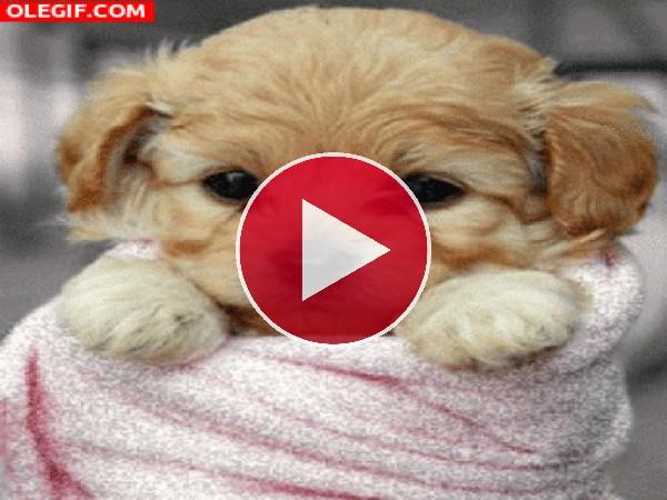 GIF: Un lindo perrito