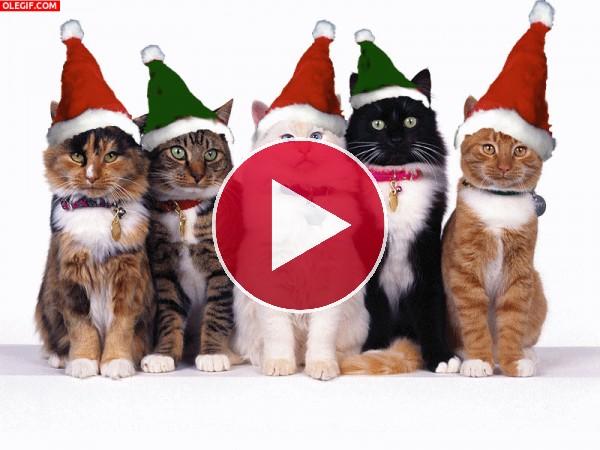 Unos simpáticos gatos navideños