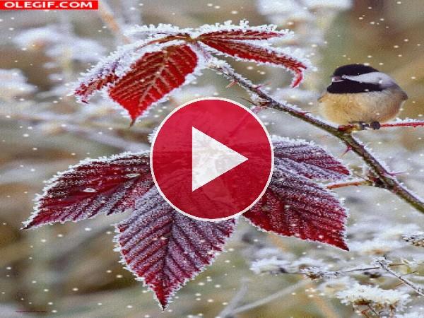 GIF: Nieve cayendo sobre un pájaro