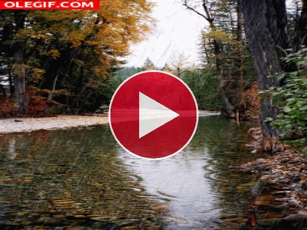 GIF: Fina lluvia cayendo en otoño