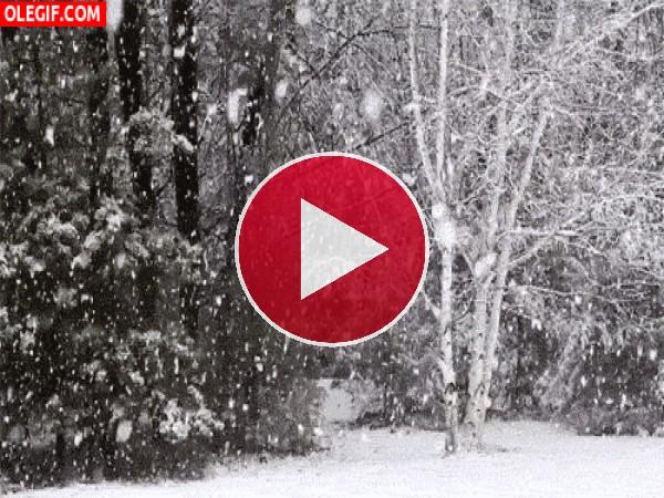 Copos de nieve cayendo en el bosque