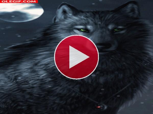 GIF: Un hermoso lobo mágico