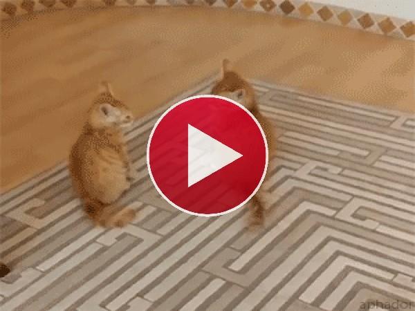 GIF: ¿Quien atacará primero?