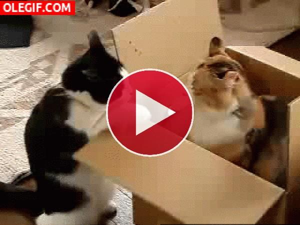 ¡Esa caja es mía!