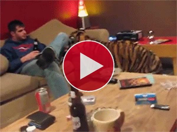 Este tigre quiere mimos