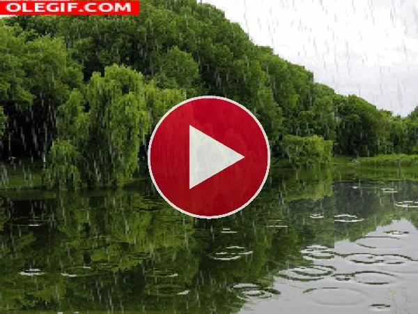 GIF: Lluvia de primavera