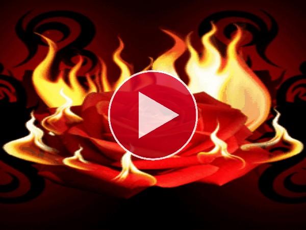 Rosa envuelta en llamas