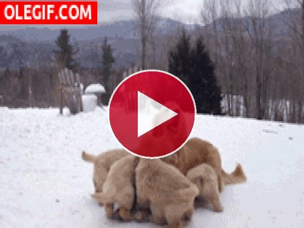 Jugando con mamá en la nieve