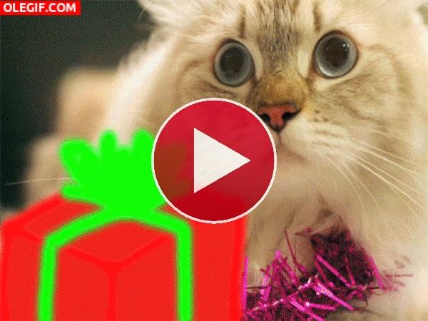 GIF: Navidad gatuna