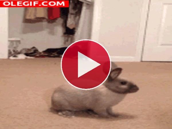 GIF: ¡Me has asustado!