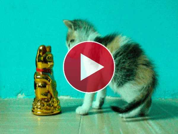 GIF: El hipnotizador de gatos