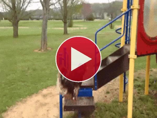 A este perro le gusta tirarse por el tobogán