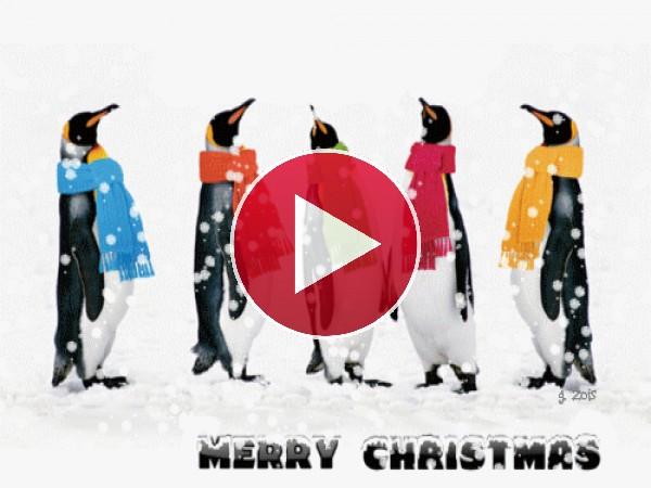 """GIF: Estos pingüinos te desean """"Feliz Navidad"""""""
