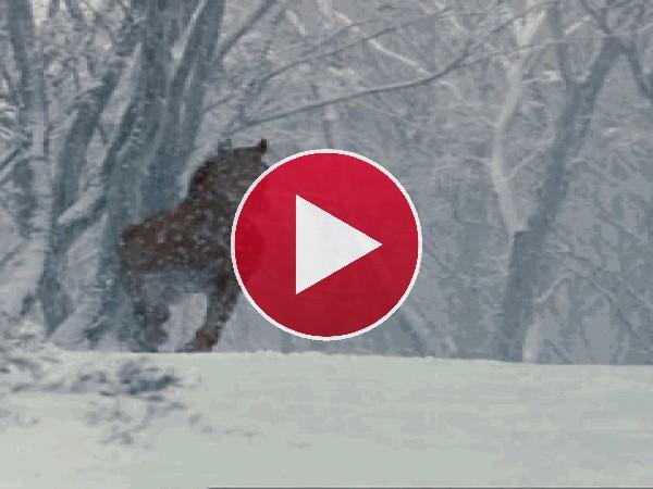 GIF: Caballo cabalgando bajo la nieve