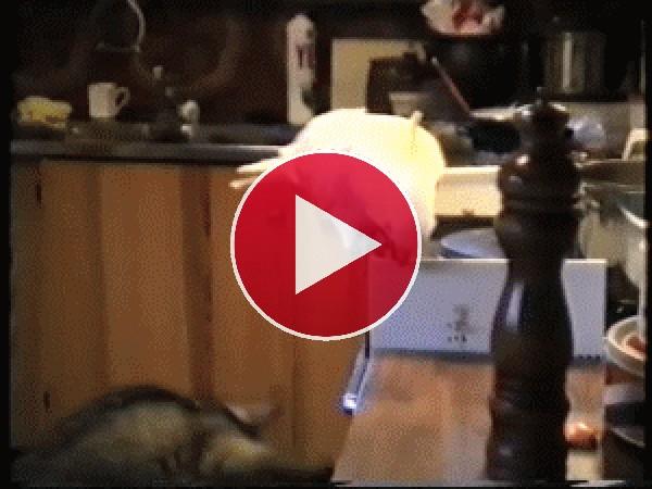 Mira a esta cacatúa dando de comer al perro