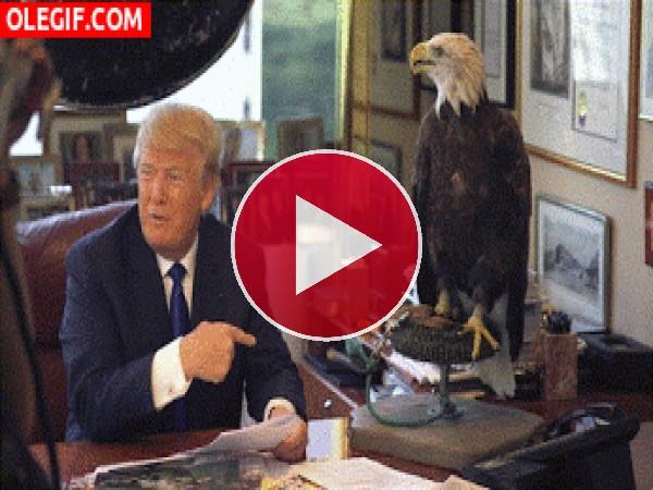 GIF: Picotazo a Donald Trump