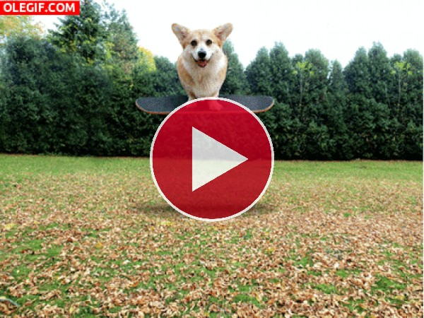 GIF: Manteniendo el equilibrio