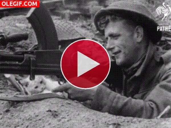 GIF: Un gato en las trincheras