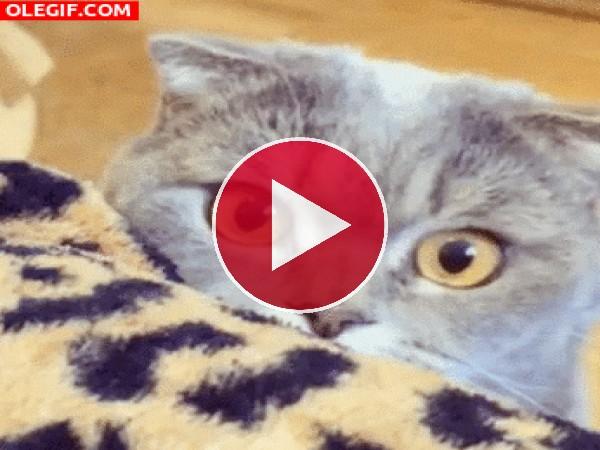 Qué habrá visto este gato para que se le dilaten las pupilas