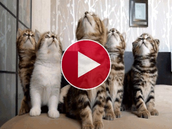 GIF: Unos gatitos muy sincronizados