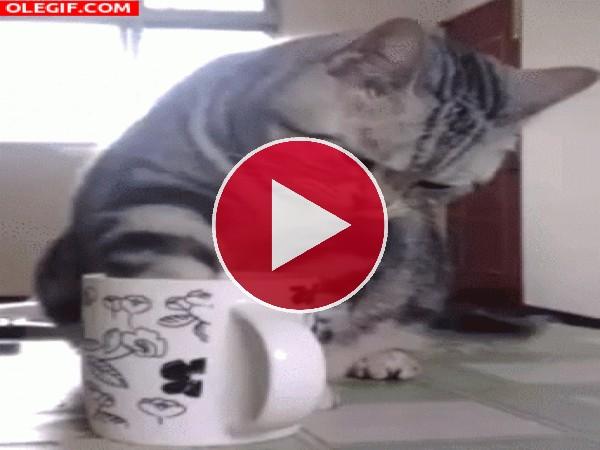 A este gato le gusta el café por las mañanas