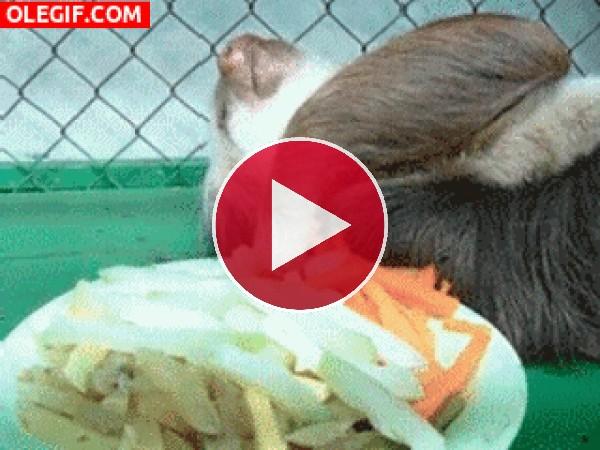 GIF: Soy perezoso hasta para comer