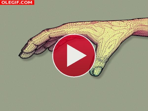 GIF: Descomposición de una mano