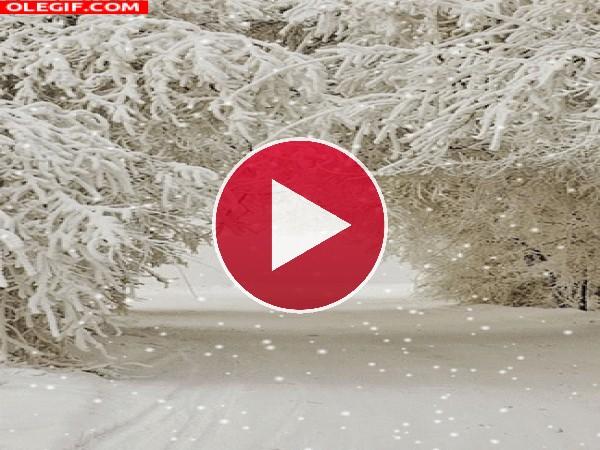 GIF: Nieva en invierno