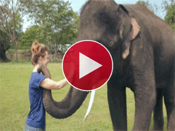 Mira cómo se despide el elefante
