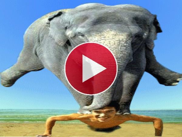 GIF: Puedo con un elefante