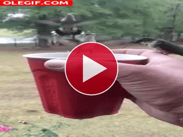 Dando de beber a unos colibrís