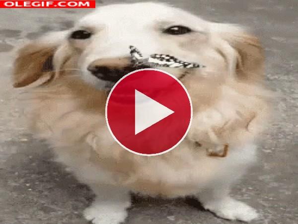 GIF: Mariposa en el hocico del perro