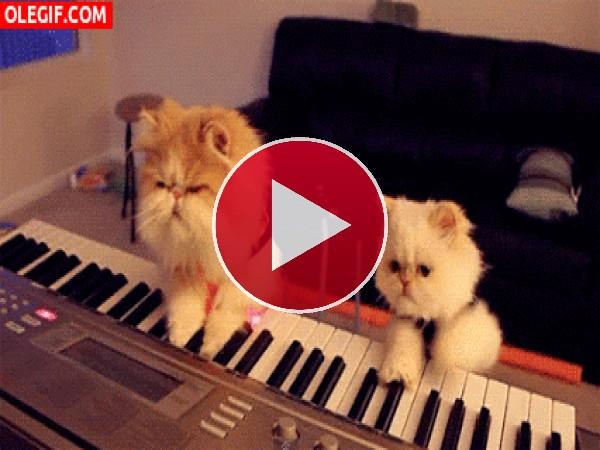 GIF: Toquemos el piano