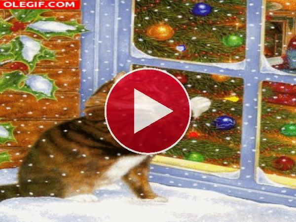 Gato junto a una ventana en Navidad