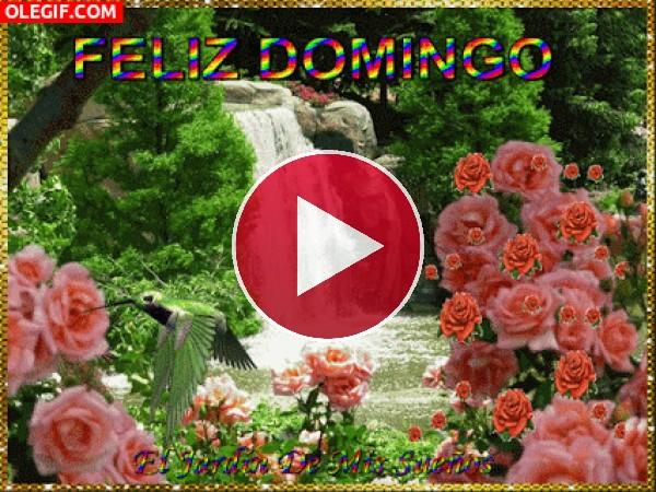 GIF: Feliz Domingo