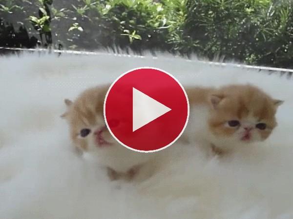 GIF: Dos lindos gatitos