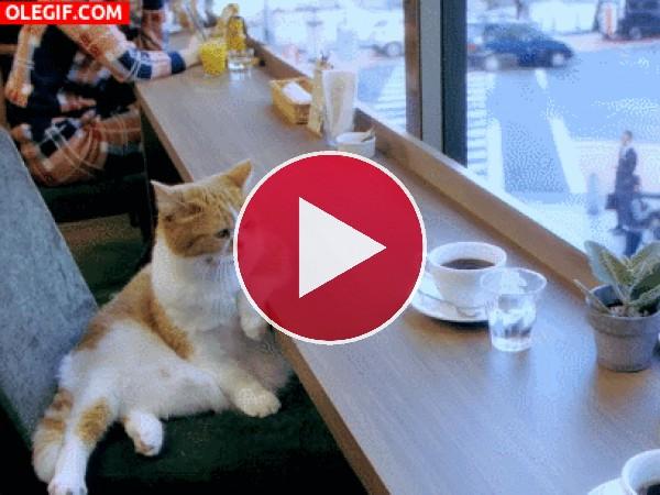 GIF: Tomando un café