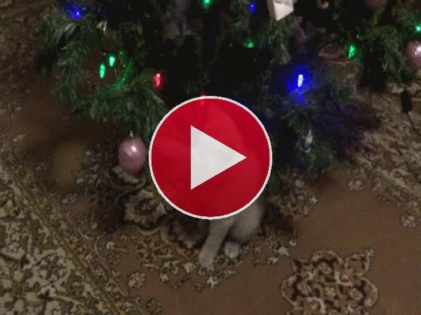 Jugando con las bolas del árbol de Navidad