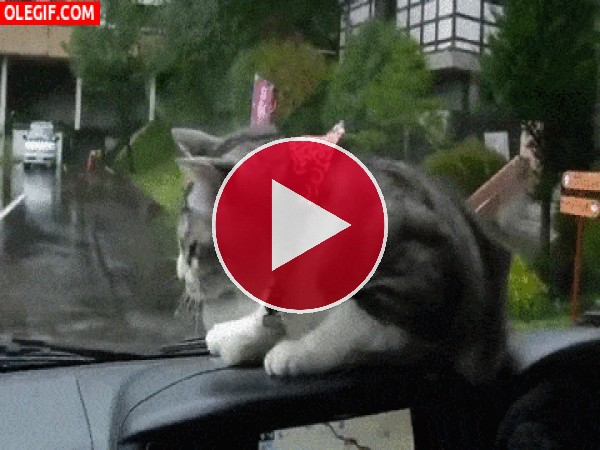 GIF: Un gato asustadizo
