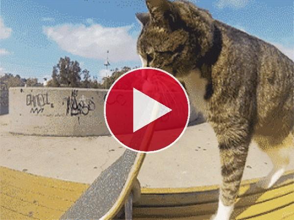 GIF: El gato skater