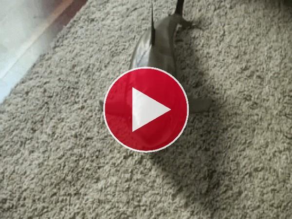 La muerte del tiburón