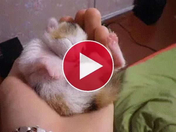 Un pequeño gato en la palma de una mano