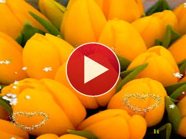 Los tulipanes del amor