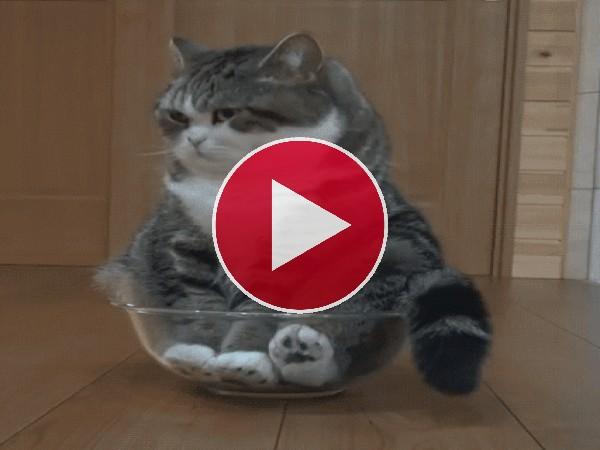 GIF: Pues se esta bien aquí sentado
