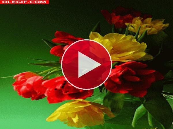 GIF: Bonitas flores