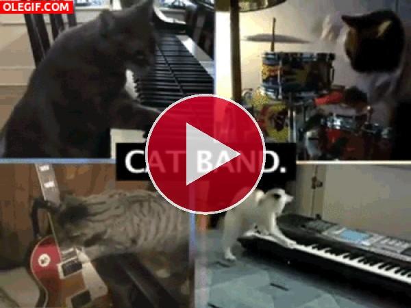 GIF: La banda de los gatos