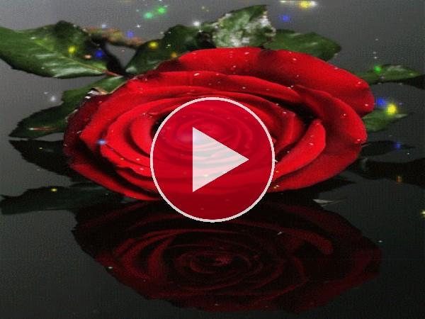 GIF: Destellos sobre una rosa roja