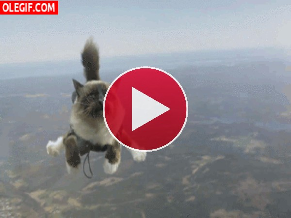 GIF: El gato volador