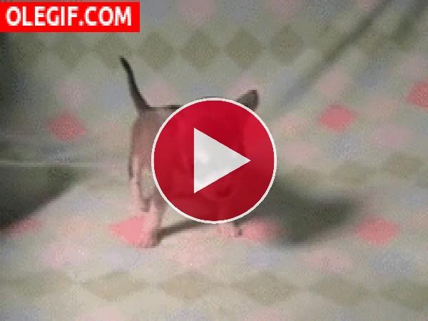 GIF: Un pequeño cachorro